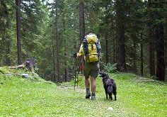 Cane-Trekking-Montagna-Boschi-FlickrCC-austriatourism